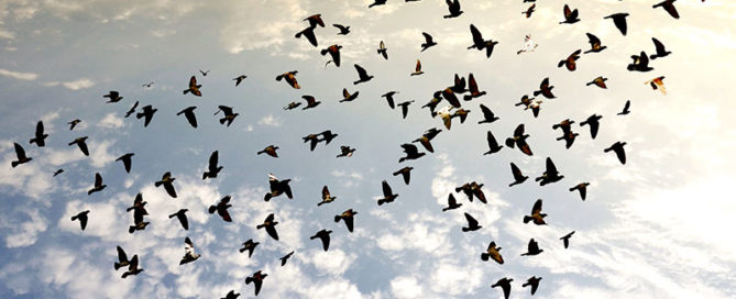 D&M Creative Birds flying